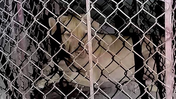 Hà Tĩnh: Nữ lao công 65 tuổi bị chó dữ tấn công - Ảnh 1