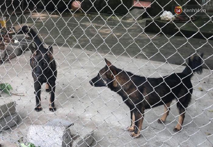 TP.HCM: 1.300 người bị chó, mèo cắn gây thương tích nặng chỉ trong 2 tháng - Ảnh 2