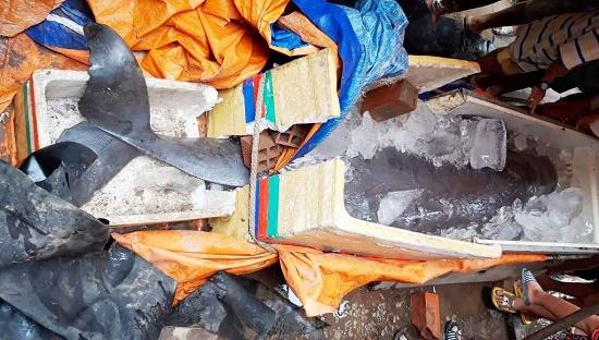 Ngư dân bắt được cá hiếm 150kg trên sông Cổ Chiên đồng ý nhận 5 triệu tiền hỗ trợ - Ảnh 2