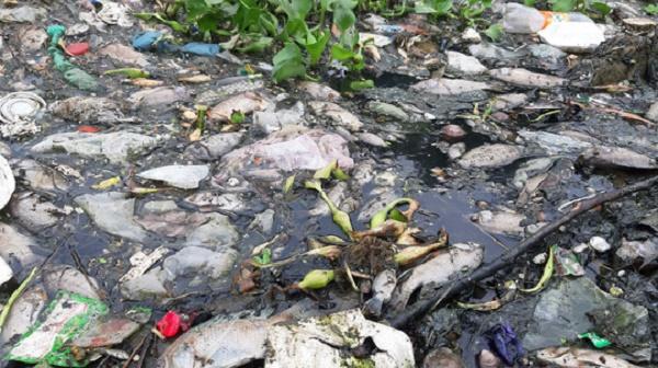 Đà Nẵng: Người dân bức xúc vì cá chết bốc mùi hôi nồng nặc - Ảnh 2