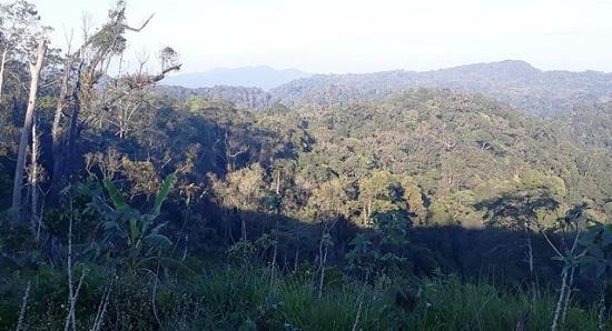 Bình Định: Tìm thấy thi thể kiểm lâm mất tích bí ẩn trong rừng keo - Ảnh 1