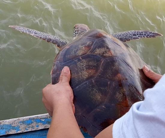 Ngư dân Nghệ An từ chối 250 triệu đồng, quyết thả đồi mồi dứa quý hiếm về biển - Ảnh 1