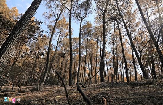 Vì sao chưa huy động trực thăng chữa cháy rừng nghiêm trọng ở Hà Tĩnh? - Ảnh 2