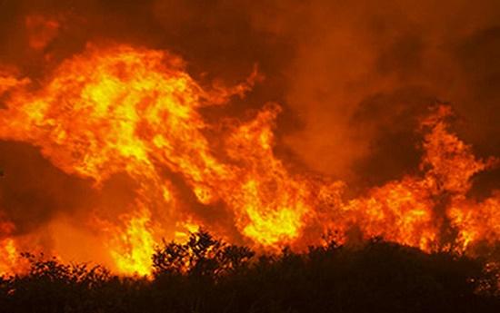 Nghi vấn thợ đốt ong đốt luôn 10ha rừng phòng hộ tại Bình Định - Ảnh 1