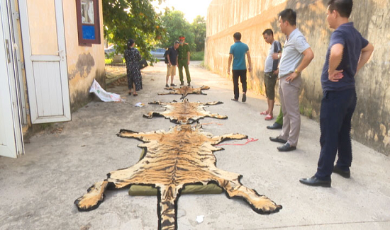 """""""Ông trùm"""" buôn bán hổ ở Quảng Ninh sa lưới - Ảnh 1"""