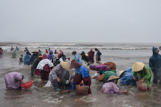 Cả trăm người dân đổ xô đi vớt vẹm trôi dạt vào bờ - Ảnh 1