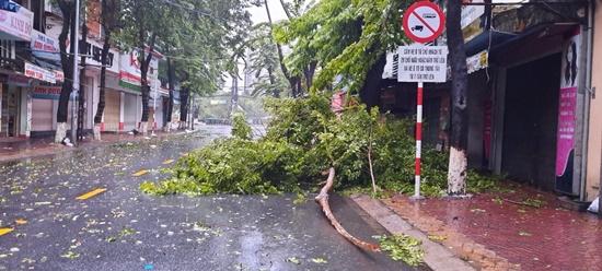 Cận cảnh sức phá hoại khủng khiếp của bão số 9 đổ bộ vào Quảng Ngãi: Cây xa la liệt đổ, thổi bay mái tôn - Ảnh 4