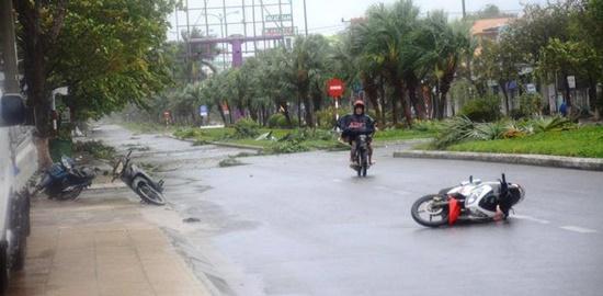 Cận cảnh sức phá hoại khủng khiếp của bão số 9 đổ bộ vào Quảng Ngãi: Cây xa la liệt đổ, thổi bay mái tôn - Ảnh 7