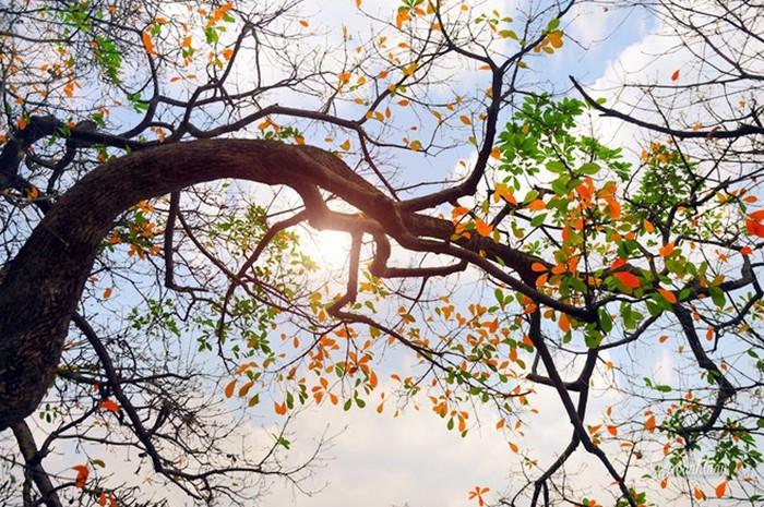 Dự báo thời tiết ngày 18/11: Hà Nội có mưa, trưa chiều hửng nắng - Ảnh 1