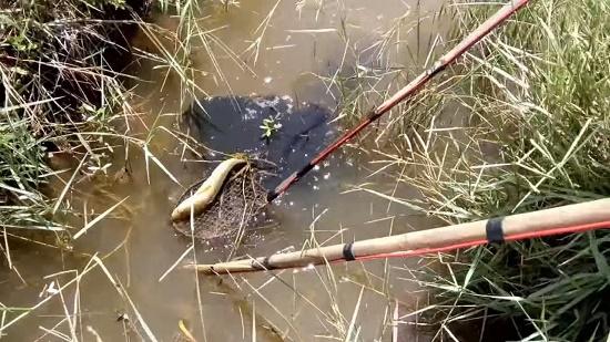 Người đàn ông tử vong bất thường khi đánh cá bằng kích điện ở rừng U Minh - Ảnh 1
