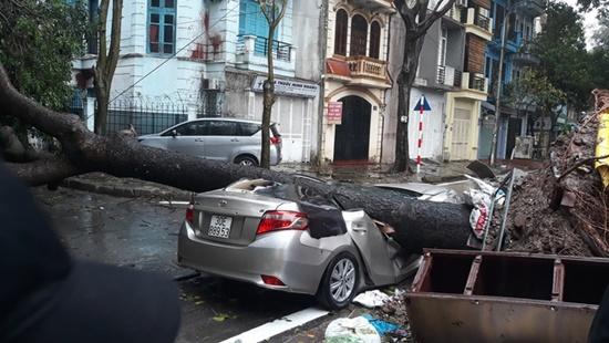 Cây cổ thụ ở Hà Nội bật gốc sau trận mưa lớn, đè bẹp xế sang đỗ bên đường - Ảnh 2