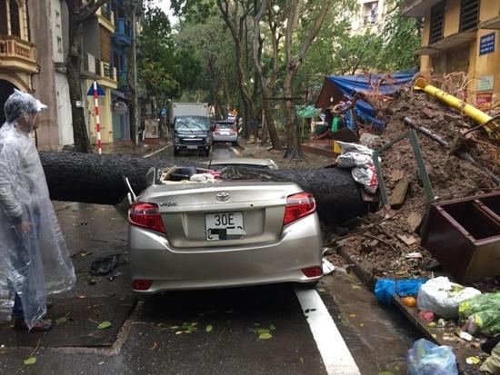 Cây cổ thụ ở Hà Nội bật gốc sau trận mưa lớn, đè bẹp xế sang đỗ bên đường - Ảnh 3