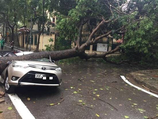 Cây cổ thụ ở Hà Nội bật gốc sau trận mưa lớn, đè bẹp xế sang đỗ bên đường - Ảnh 1