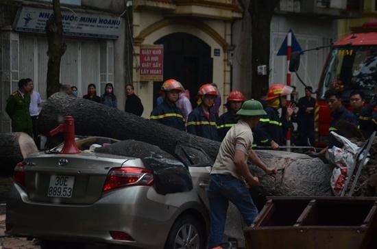 Cây cổ thụ ở Hà Nội bật gốc sau trận mưa lớn, đè bẹp xế sang đỗ bên đường - Ảnh 6