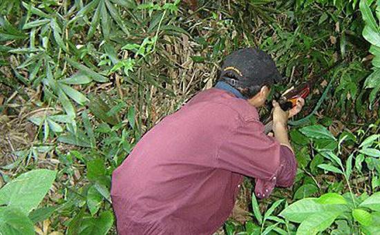 Xét xử bố dùng súng bắn chết con trai trong lúc đi săn vì tưởng là lợn rừng - Ảnh 1
