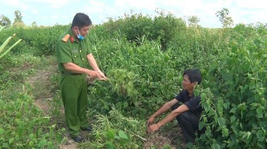 Bất ngờ lời khai của 2 người đàn ông trồng cần sa trong vườn nhà - Ảnh 1