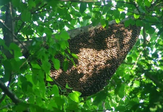 Gia cảnh khốn khó của người đàn ông bị ong rừng đốt tử vong - Ảnh 1