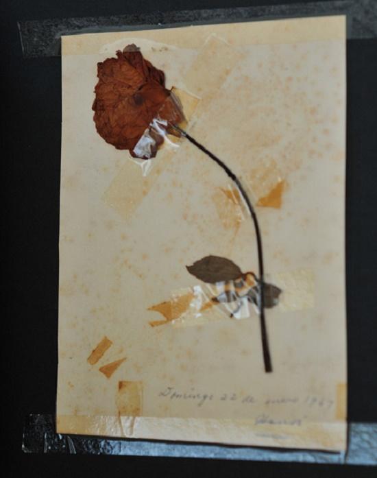 Vẻ đẹp bông hồng 5 thập kỷ Bác tặng nữ phiên dịch Cuba - Ảnh 1