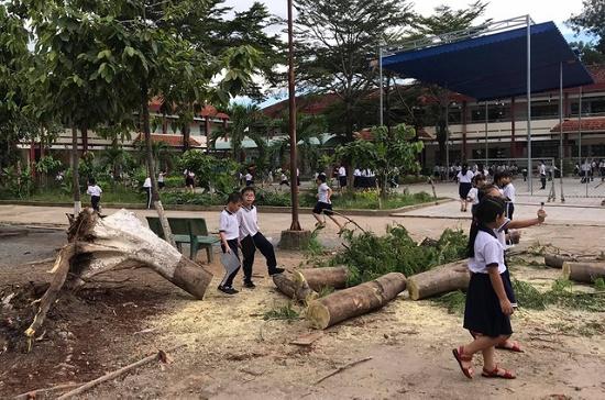Lại thêm một cây phượng bật gốc, đổ xuống sân trường tiểu học tại Bình Dương - Ảnh 1