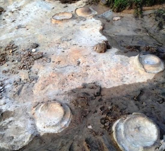 Gia Lai: Phát hiện hóa thạch nghi Cúc đá 200 triệu tuổi ở mép sông Ba - Ảnh 1
