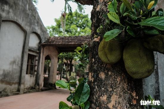 Cảnh sắc cổ kính bên trong Viên Minh tự - nơi Chủ tịch tập đoàn Tôn Hoa Sen quy y Tam bảo - Ảnh 12