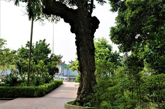 Cảnh sắc cổ kính bên trong Viên Minh tự - nơi Chủ tịch tập đoàn Tôn Hoa Sen quy y Tam bảo - Ảnh 10