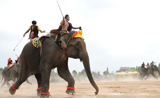 Nữ du khách nguy kịch vì bị voi húc ngã - Ảnh 1
