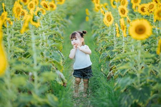"""Lịm tim trước khoảnh khắc em bé """"xinh đẹp tựa thiên thần"""" giữa cánh đồng hoa hướng dương - Ảnh 1"""