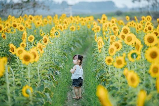 """Lịm tim trước khoảnh khắc em bé """"xinh đẹp tựa thiên thần"""" giữa cánh đồng hoa hướng dương - Ảnh 5"""
