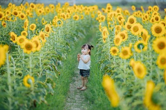 """Lịm tim trước khoảnh khắc em bé """"xinh đẹp tựa thiên thần"""" giữa cánh đồng hoa hướng dương - Ảnh 6"""