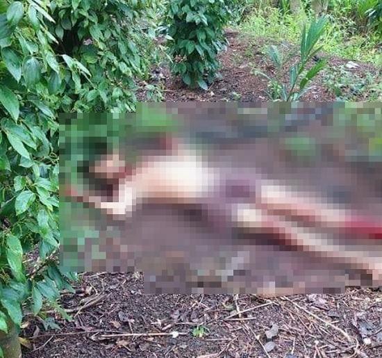 Điều tra vụ phát hiện thi thể người đàn ông trong vườn tiêu, bên cạnh là 1 con dao - Ảnh 1