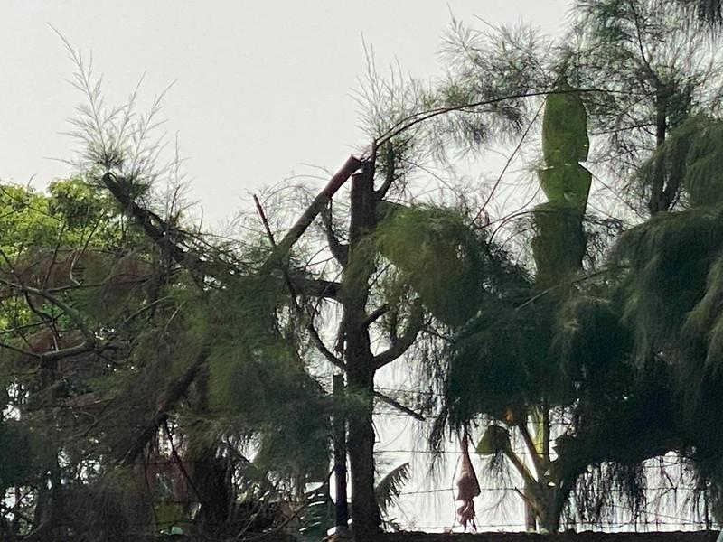 Vụ nam sinh lớp 9 tử vong khi cắt tỉa cây ở Hải Dương: Cách chức hiệu trưởng, cảnh cáo hiệu phó - Ảnh 2