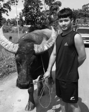 Nam thanh niên 9X kể chuyện buôn trâu xuyên biên giới - Ảnh 2