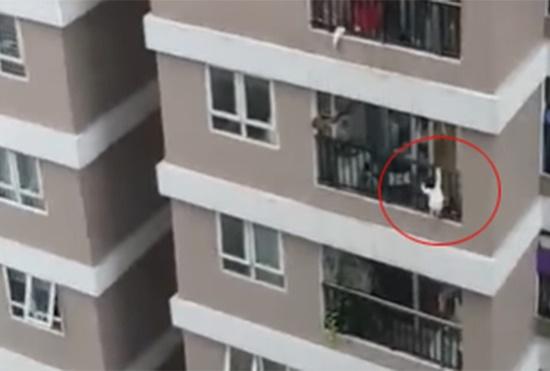 Hiện trường vụ bé gái 3 tuổi rơi từ tầng 12 chung cư ở Hà Nội - Ảnh 1