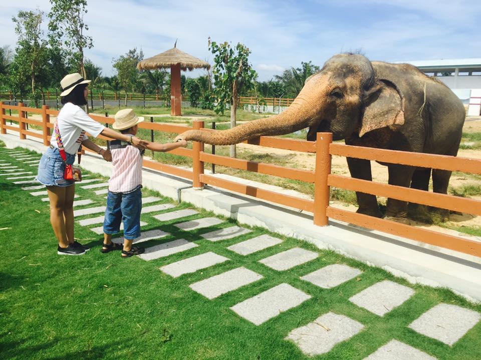 Khám phá FLC Zoo Safari Park – vườn thú bán hoang dã độc đáo tại Quy Nhơn  - Ảnh 4