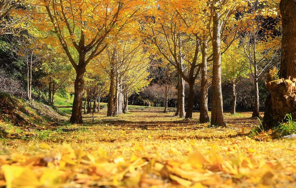 5 địa điểm với khung cảnh mùa thu không khác gì trong phim ở Đài Loan  - Ảnh 4