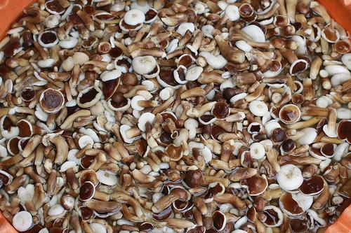 5 trải nghiệm ẩm thực ngon quên lối về ở Nam Phú Quốc - Ảnh 4