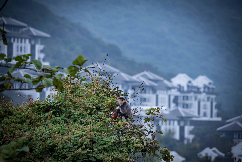 Việt Nam đang vượt lên trên cuộc đua phát triển du lịch xanh  - Ảnh 7