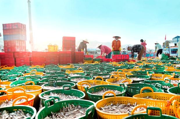 Nước Mắm Cá Cơm Cà Ná – Tinh hoa nước mắm truyền thống Việt  - Ảnh 2