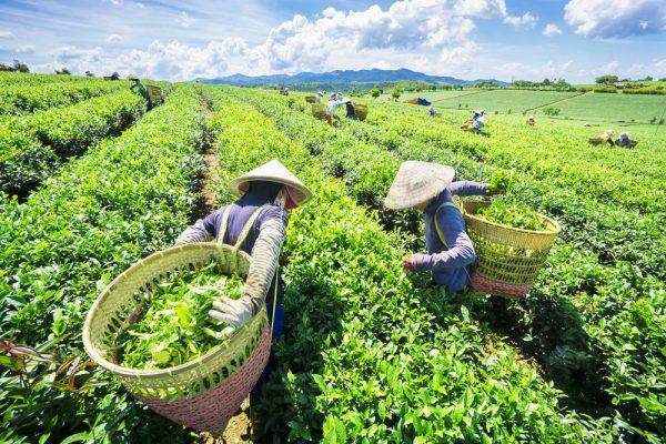 Khởi sắc xây dựng nông thôn mới trên vùng đất Phú Lương - Ảnh 1