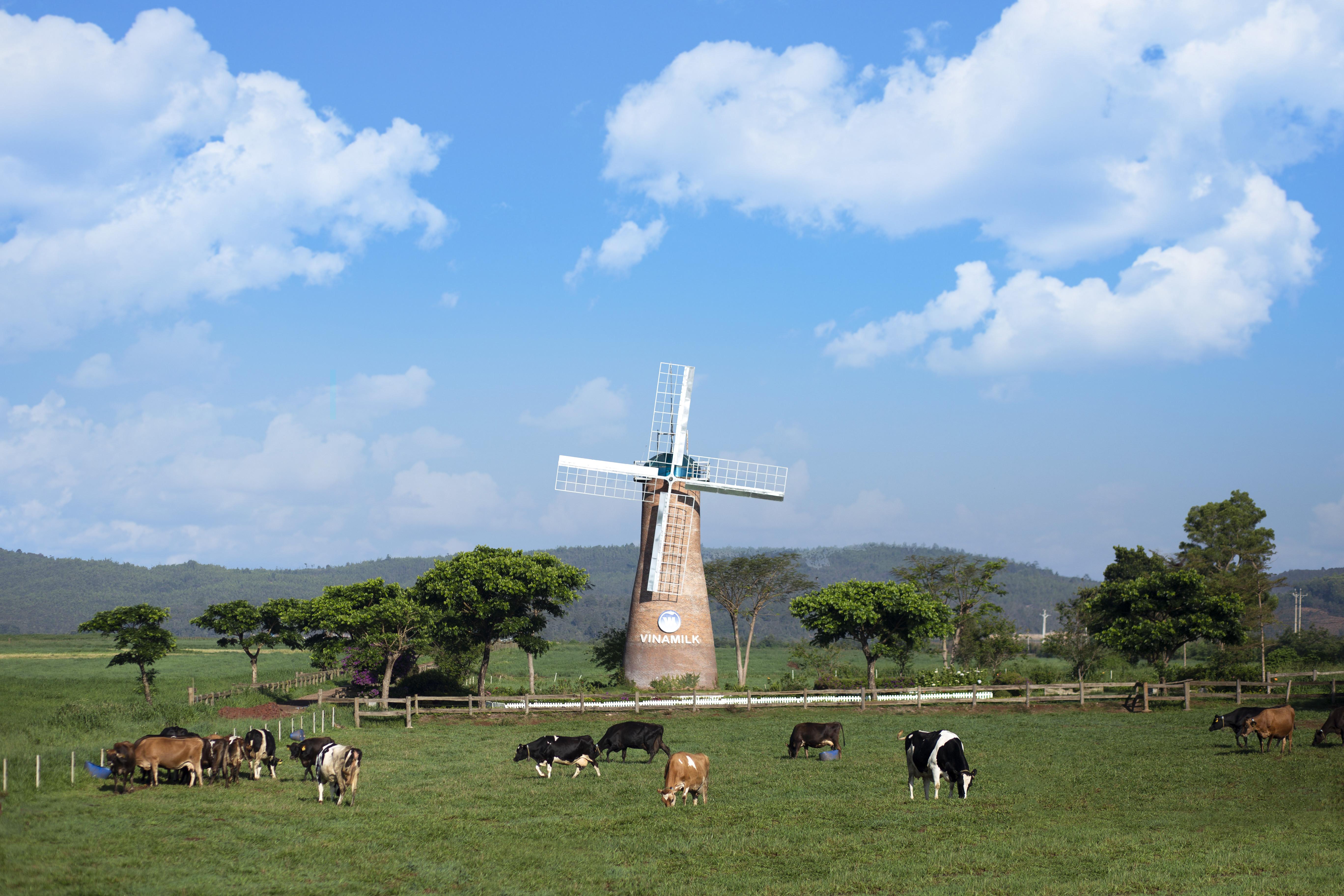 Vinamilk và những bước đi chiến lược trong 30 năm phát triển ngành chăn nuôi bò sữa - Ảnh 5
