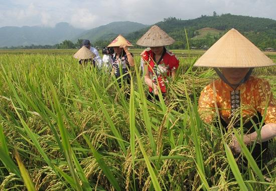 Chi cục Phát triển nông thôn tỉnh Yên Bái: Sơ kết công tác 6 tháng đầu năm 2019  - Ảnh 1