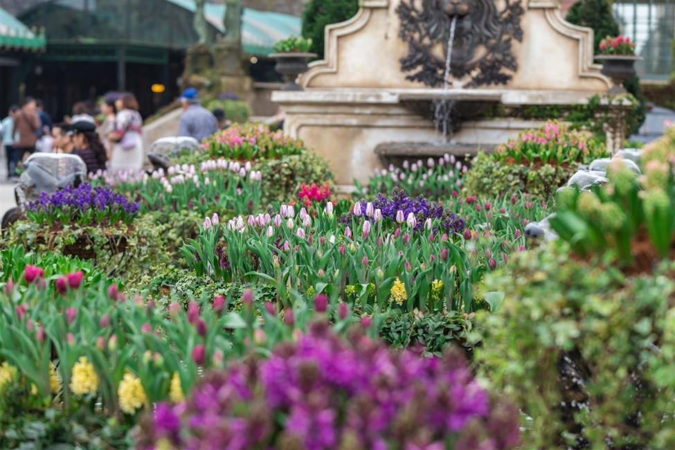 """Phiêu bồng xứ hoa Bà Nà, """"sống ảo"""" cùng 1,5 triệu bông tulip và hơn thế nữa  - Ảnh 1"""