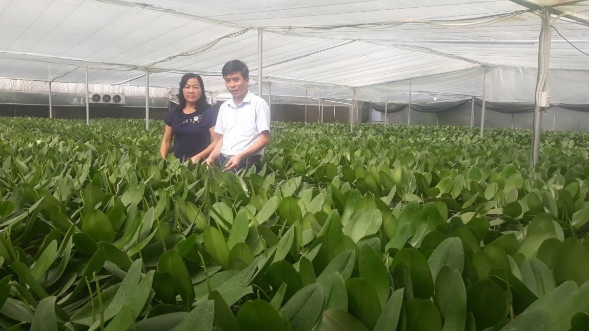 Bắc Ninh tạo đột phá mới từ nông nghiệp công nghệ cao  - Ảnh 1