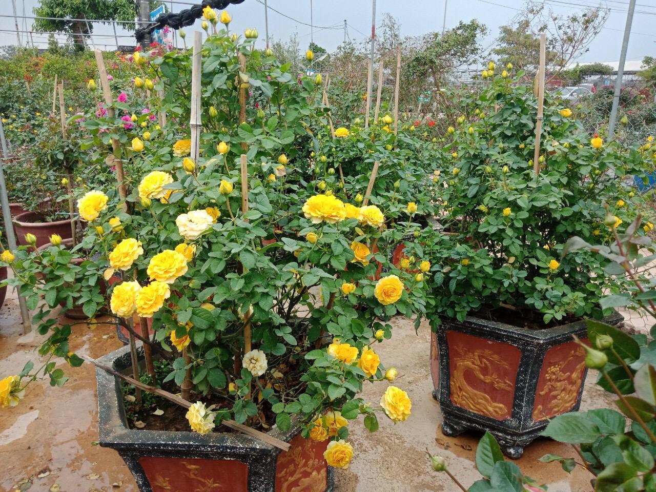 Hưng Yên: Làng nghề hoa cây cảnh Phụng Công, nhộn nhịp trước những ngày cận Tết - Ảnh 2