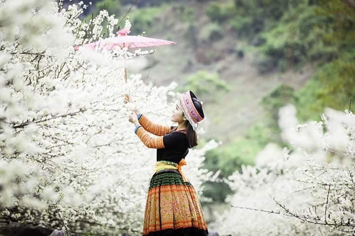 Sơn La: Hướng đi nào cho đề án phát triển du lịch huyện Mộc Châu đến năm 2025 và tầm nhìn đến năm 2030 - Ảnh 6