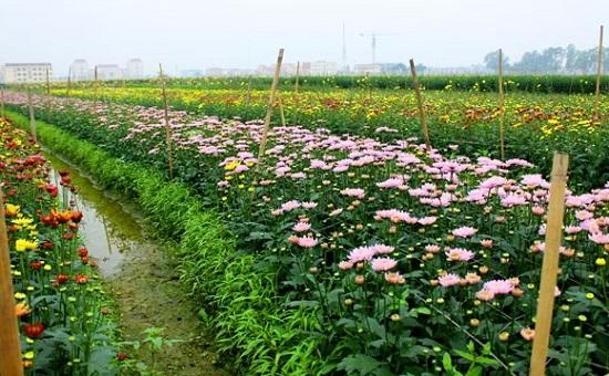 Khởi sắc xây dựng nông thôn mới trên vùng đất Mê Linh - Ảnh 2