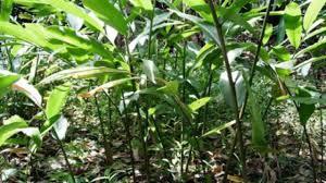 Đình Lập (Lạng Sơn):Hỗ trợ phát triển sản xuất để giảm nghèo bền vững  - Ảnh 1