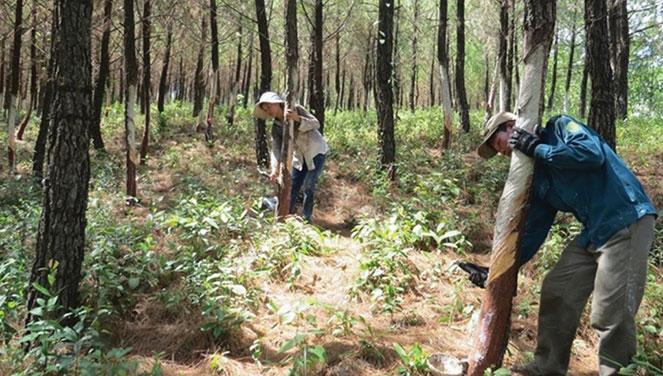 Đình Lập (Lạng Sơn):Hỗ trợ phát triển sản xuất để giảm nghèo bền vững  - Ảnh 2