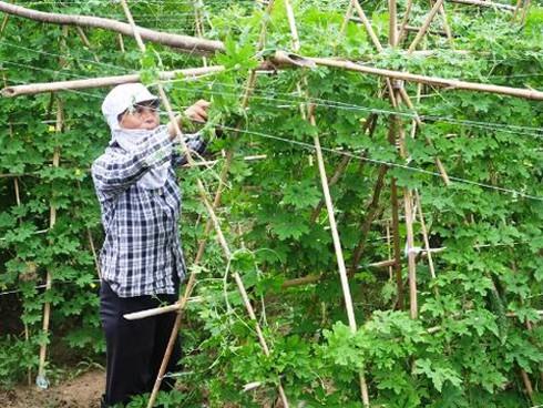 Huyện Tân Lạc - Hòa Bình: Tạo bước đột phá về sản xuất nông nghiệp  - Ảnh 1